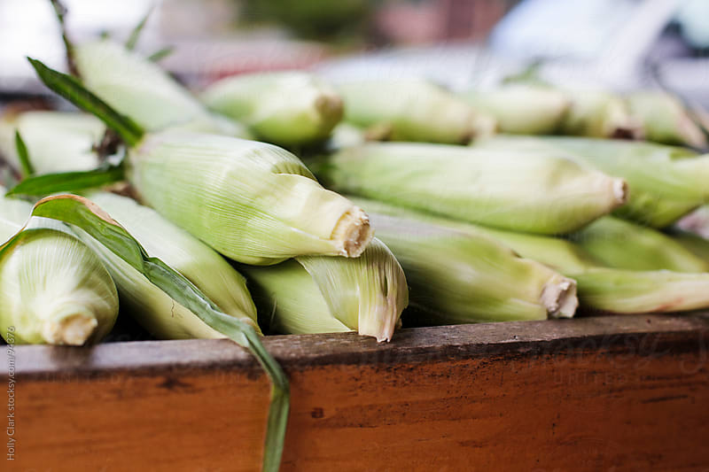 Fresh sweet corn for sale at a country store. by Holly Clark for Stocksy United