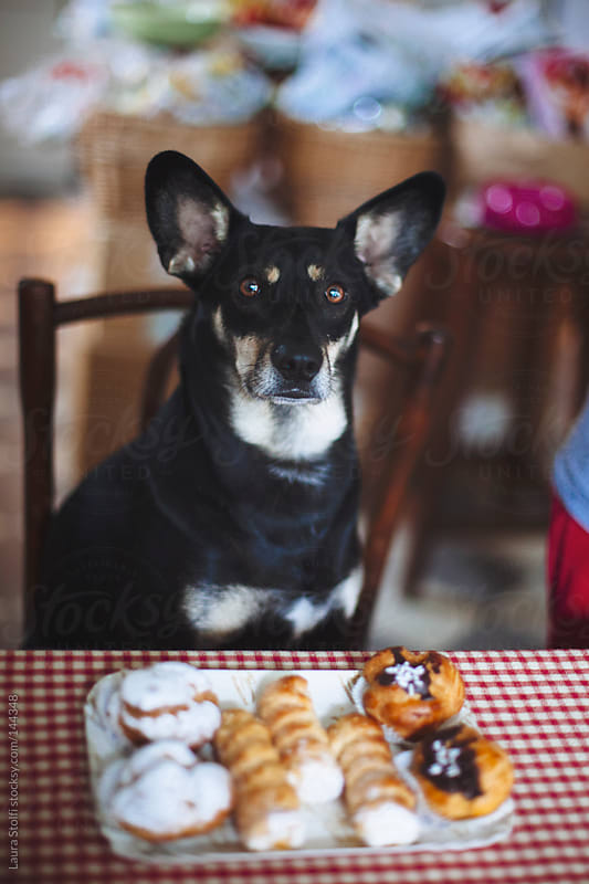 Loving pastries dog by Laura Stolfi for Stocksy United