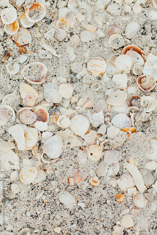 Seashells on the seashore by Amanda Worrall for Stocksy United