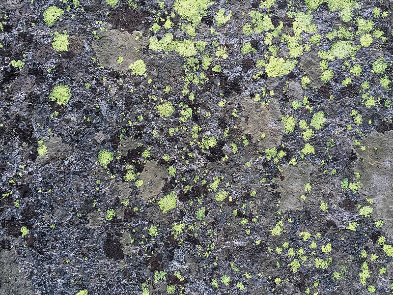 Lichen on worn granite rock by Paul Edmondson for Stocksy United