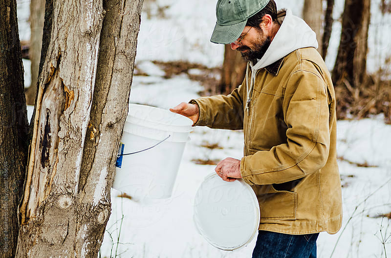 man checks bucket on maple tree for sap by Deirdre Malfatto for Stocksy United