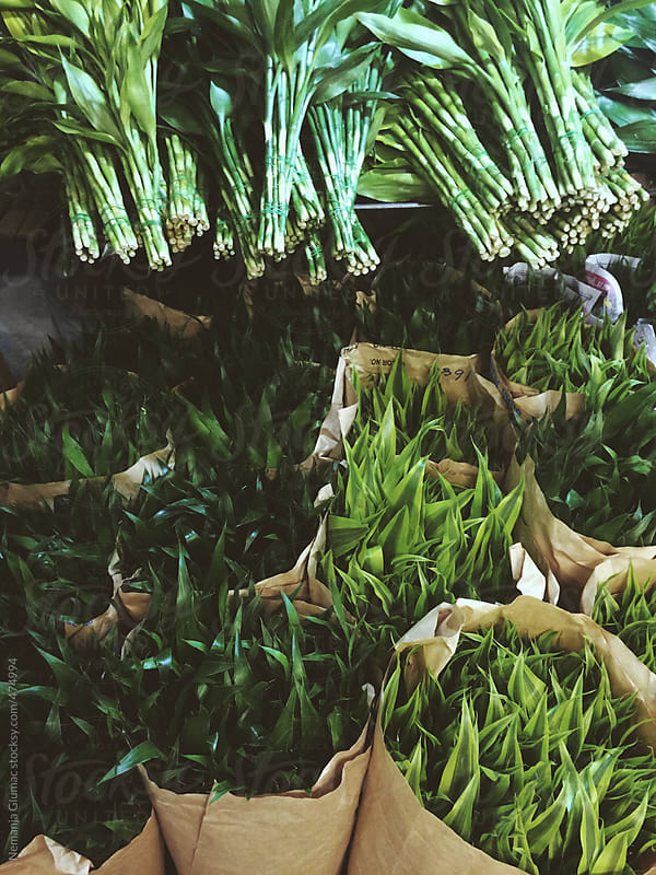 Green Decoration Leaves Sold at Flower Market by Nemanja Glumac for Stocksy United