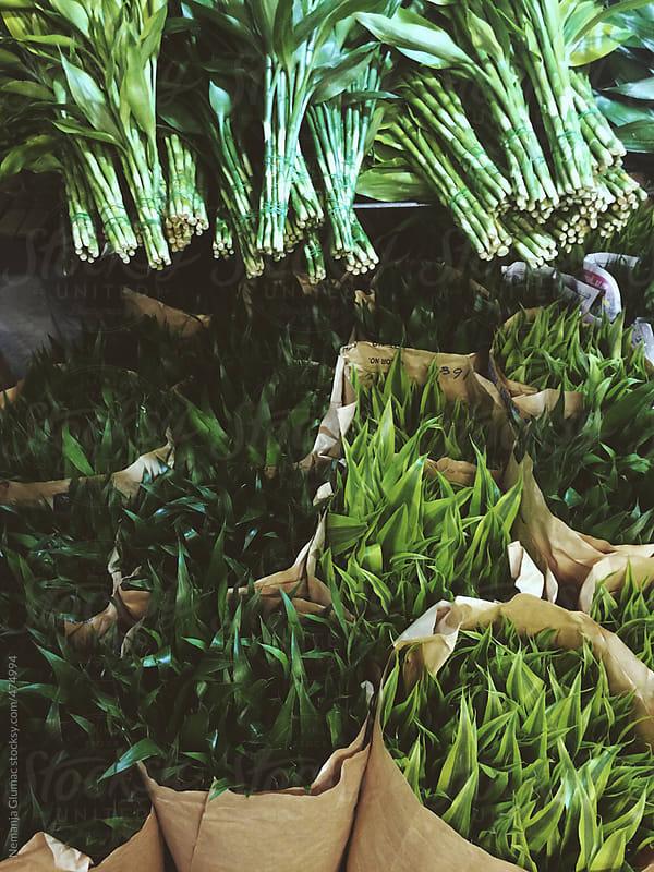 Green Decoration Leaves Sold at Flower Market by Nemanja Glumac for Stocksy United