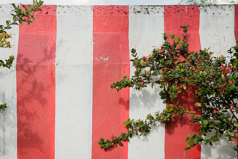 Red striped painted wall by Christine Hewitt for Stocksy United