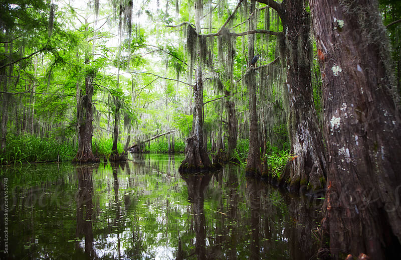 River through a Louisiana Swamp by Sean Locke for Stocksy United