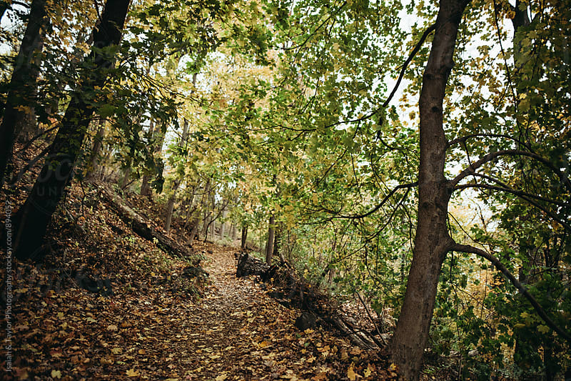 Path leading into lush trees by Isaiah & Taylor Photography for Stocksy United