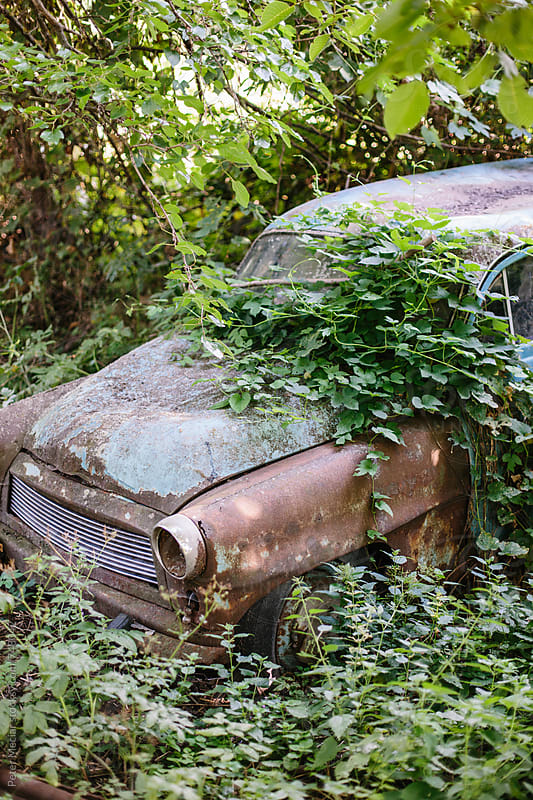 Old car overgrown trees and shrubs by Peter Meciar for Stocksy United
