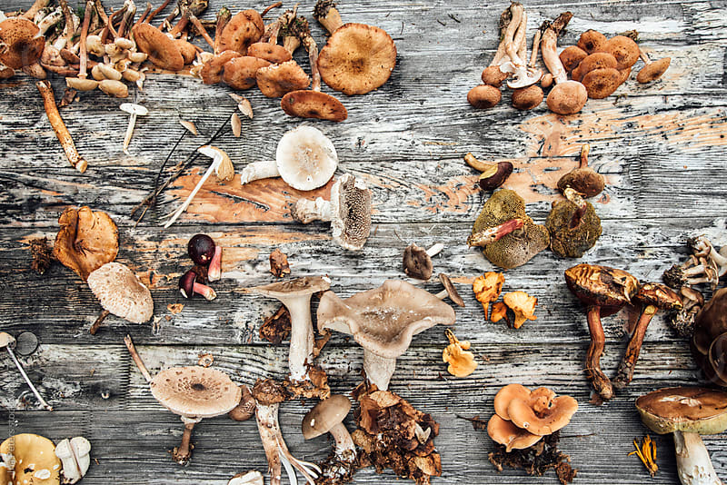 Different sorts of wild mushrooms by Ina Peters for Stocksy United