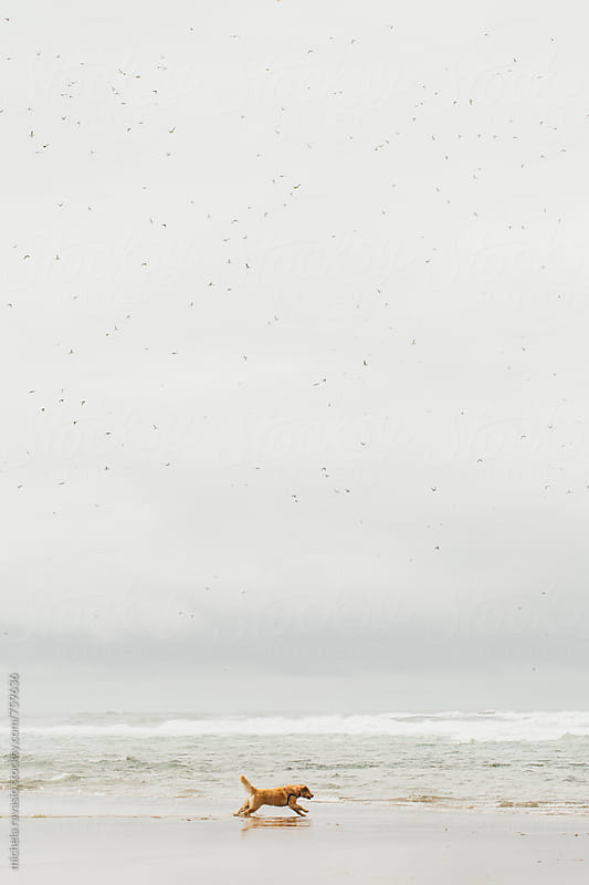 A dog running on the beach with a flock of birds above by michela ravasio for Stocksy United