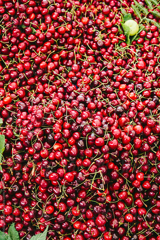 Fresh red juicy cherries on the market by Borislav Zhuykov for Stocksy United