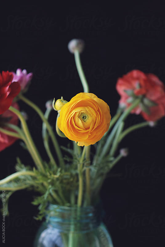 Red and Yellow Ranunculus In A Vase by ALICIA BOCK for Stocksy United