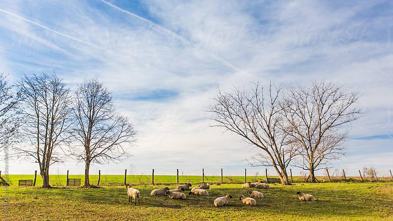 Pig farm by Mark Korecz for Stocksy United