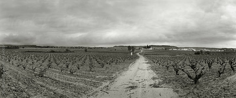 Panoramic landscape of vineyards by Miquel Llonch for Stocksy United