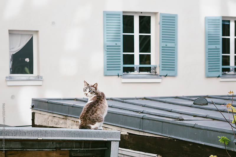 Cat on an old tin roof in Paris by Ivan Bastien for Stocksy United
