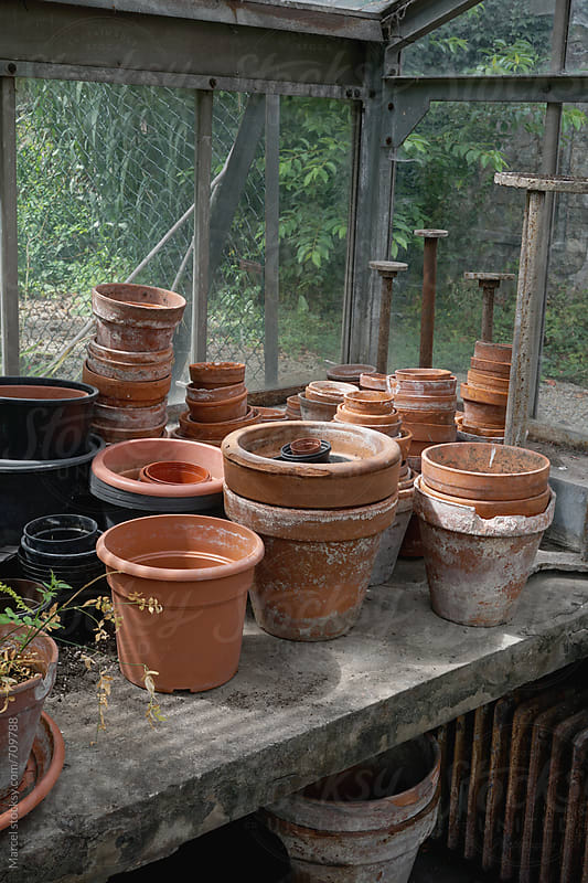 terracotta pots on a table in a greenhouse   by Marcel for Stocksy United