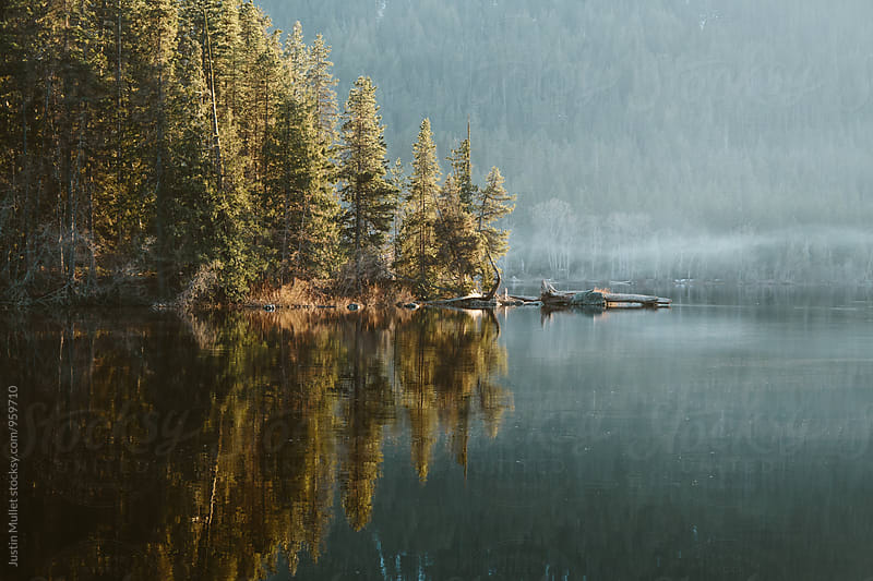 Dramatic golden light and reflection of pine trees on the lake. by Justin Mullet for Stocksy United