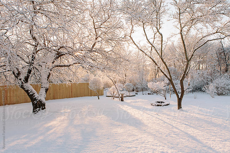Suburban Backyard Winter by Raymond Forbes LLC for Stocksy United