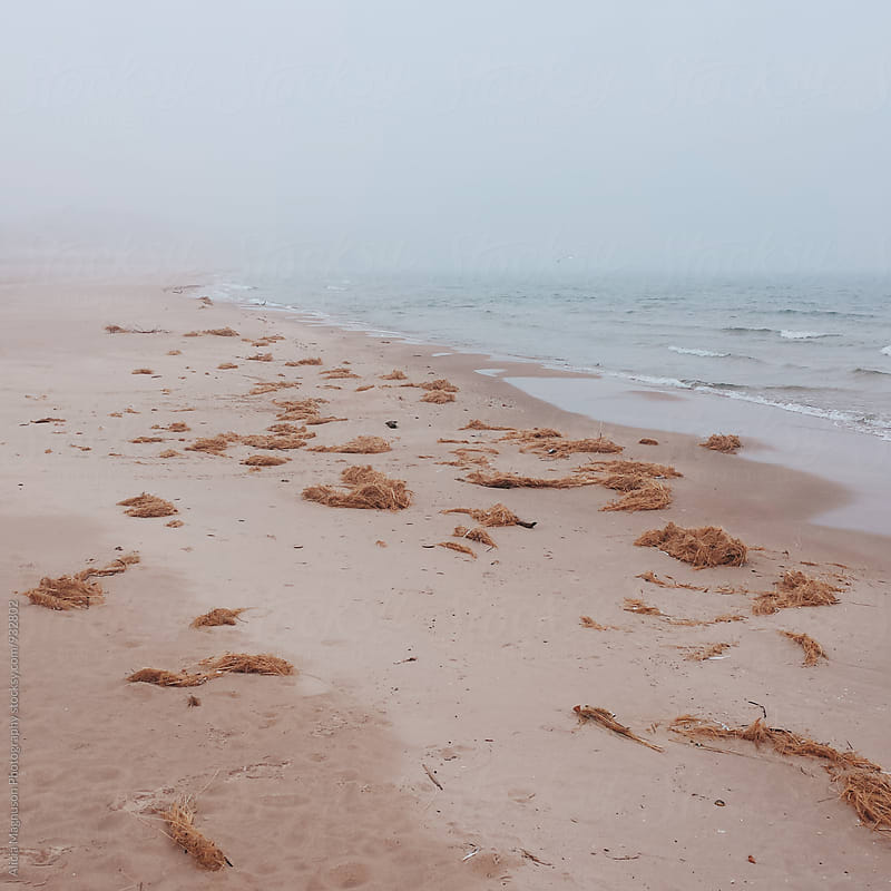 Foggy Lake Michigan Shoreline by Alicia Magnuson Photography for Stocksy United