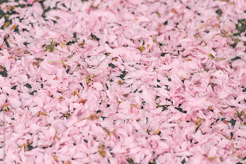 Pink Blossom Carpet by Ronnie Comeau for Stocksy United