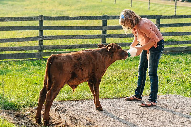 Girl feeding red devon calf milk from a bottle by Deirdre Malfatto for Stocksy United