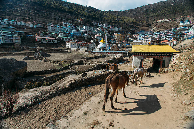Donkeys walking along road to Namche Bazar in Himalayas by Dejan Ristovski for Stocksy United