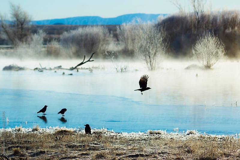Flying Blackbirds in the cold winter morning at a pond by yuko hirao for Stocksy United