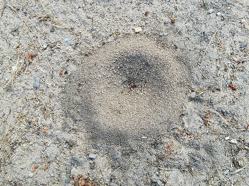 Small anthill on ground surface by Paul Edmondson for Stocksy United