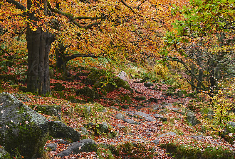 Autumnal woodland. Padley Gorge, Derbyshire, UK. by Liam Grant for Stocksy United