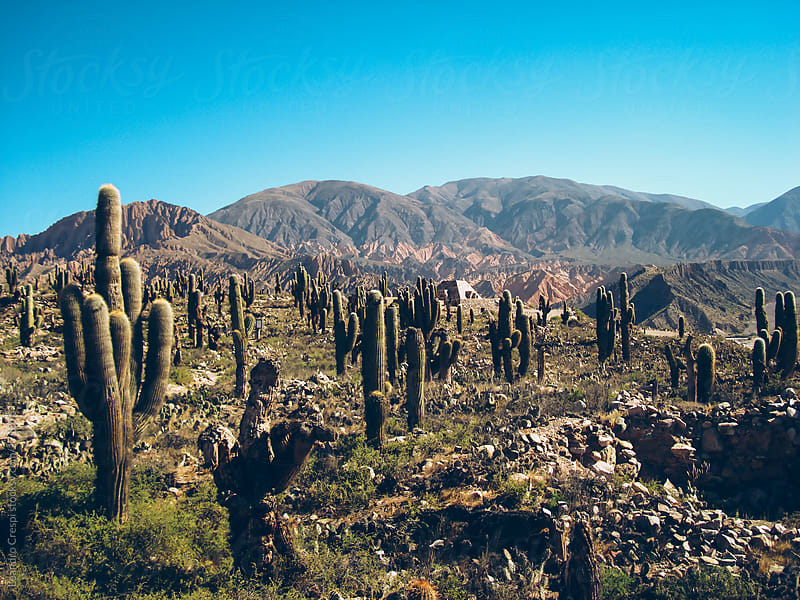 Dry landscape, mountains and cactus by Leandro Crespi for Stocksy United