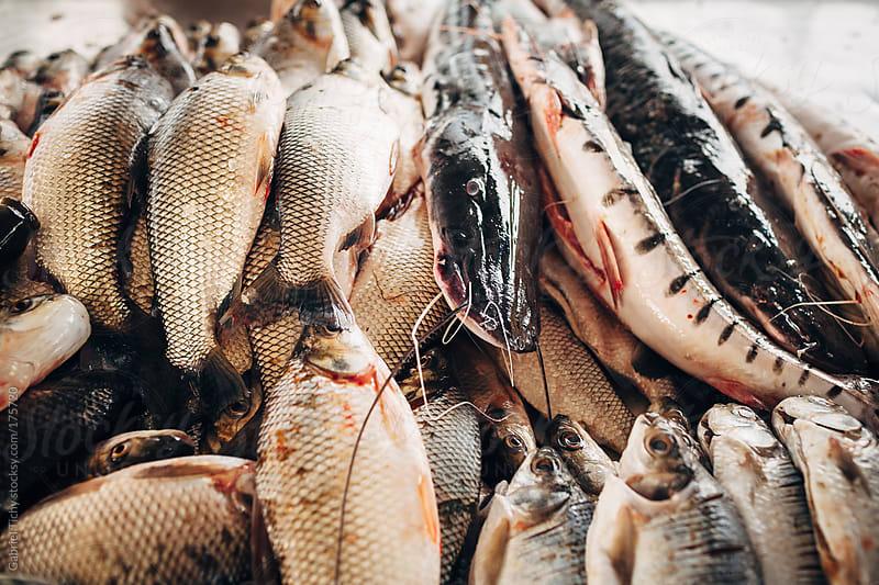 Fresh fish on sale near Amazon by Gabriel Tichy for Stocksy United