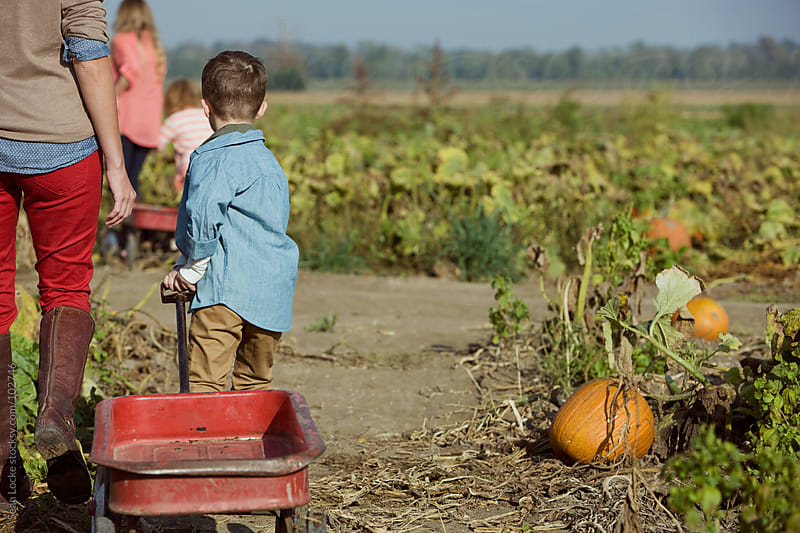 Pumpkins: Boy Pulls Wagon Into Field by Sean Locke for Stocksy United