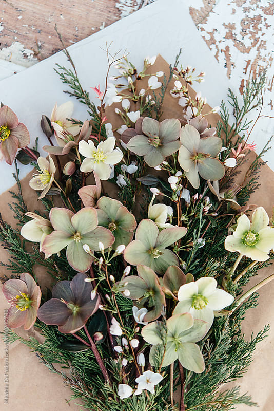 Flowers  by Melanie DeFazio for Stocksy United