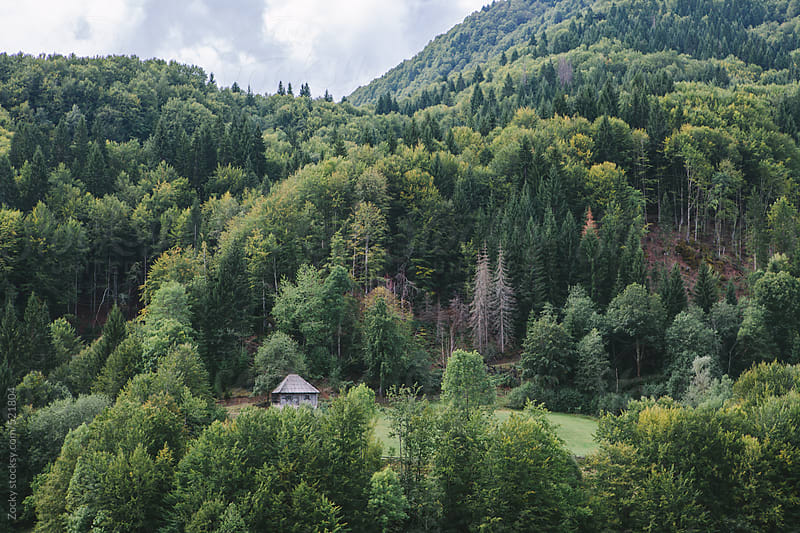 Old traditional house in the woods by Zocky for Stocksy United