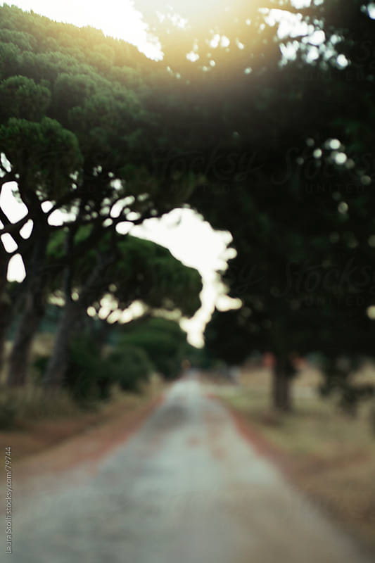 Out of focus sight of track in the mediterranean brush in Tuscany at sunrise by Laura Stolfi for Stocksy United
