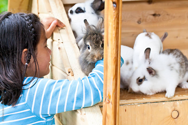 Baby Bunnies by Jill Chen for Stocksy United