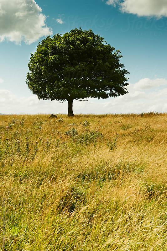 Lone tree. by Darren Muir for Stocksy United
