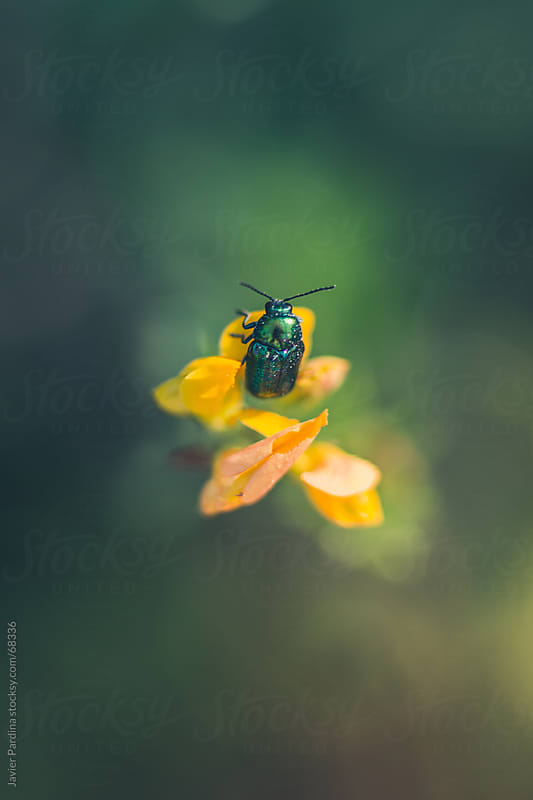 small flying insect on a plant by Javier Pardina for Stocksy United