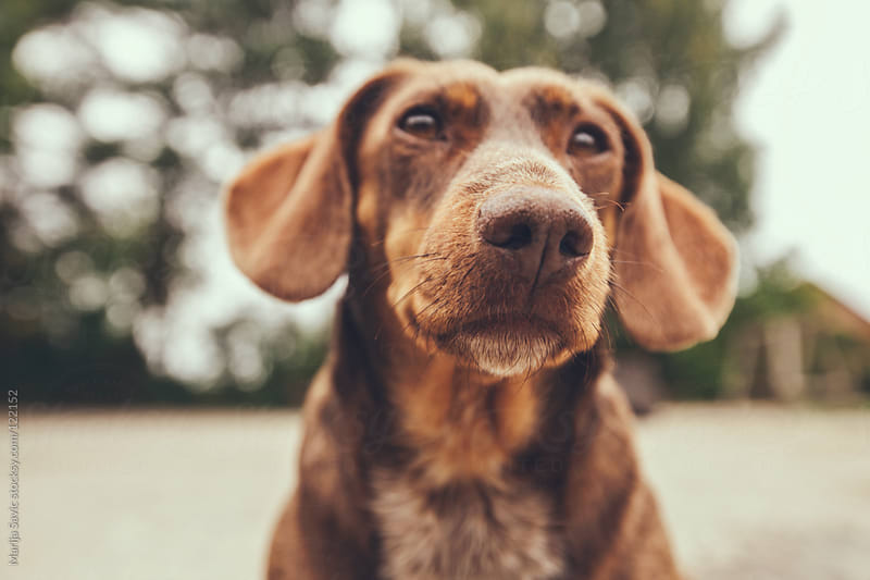 Portrait of a cute, curious dog looking away. by Marija Savic for Stocksy United