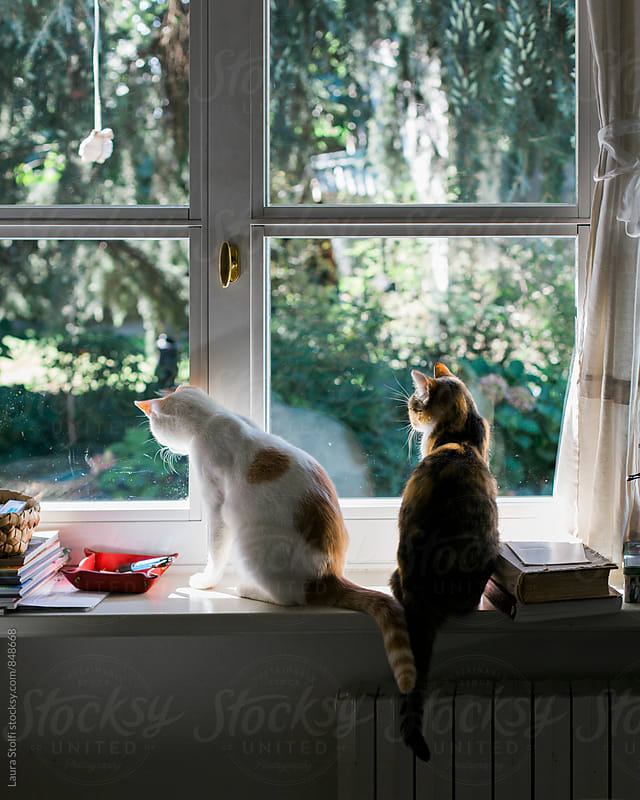 Rear sight of cats sitting together on windowsill and looking out of window. Their tails are twisted by Laura Stolfi for Stocksy United