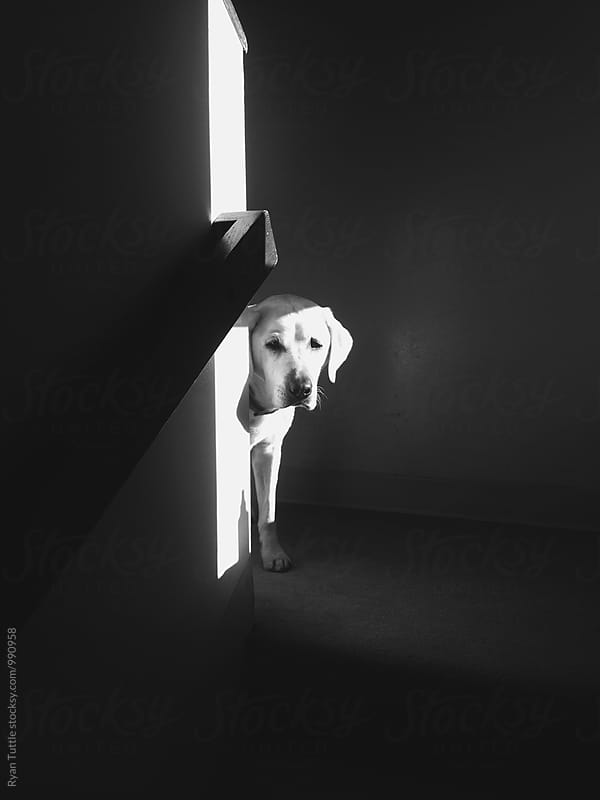 Dog looking around the corner by Ryan Tuttle for Stocksy United