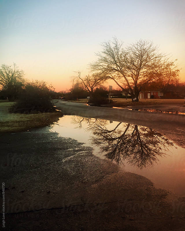 Reflection Of Bare Tree in a Puddle at Sunset by Leigh Love for Stocksy United