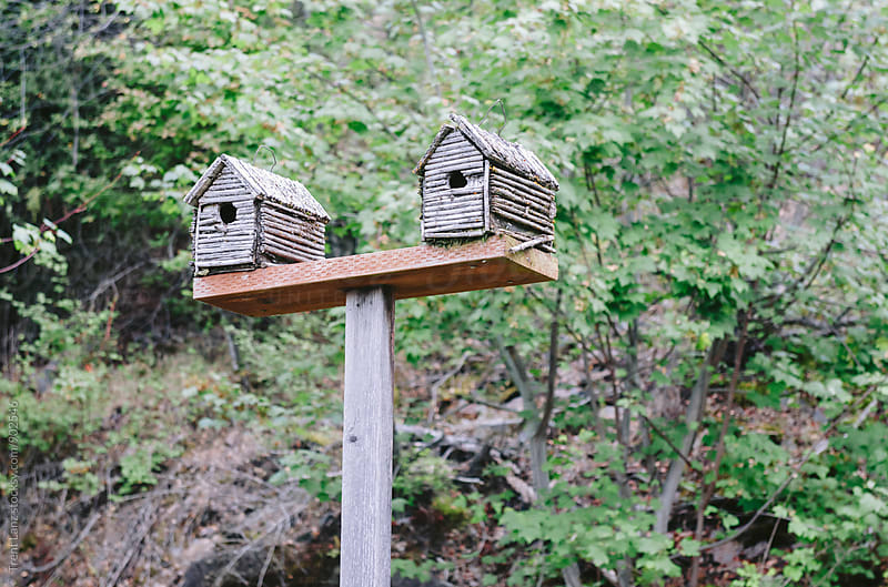 Two birdhouses on wooden plank by Trent Lanz for Stocksy United