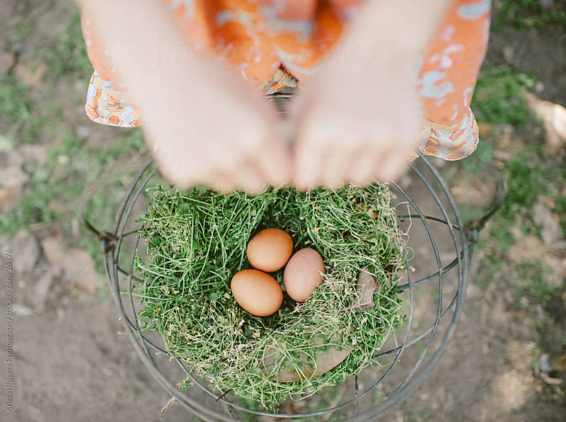 Little girl gathers brown eggs in backyard by Kristin Rogers Photography for Stocksy United