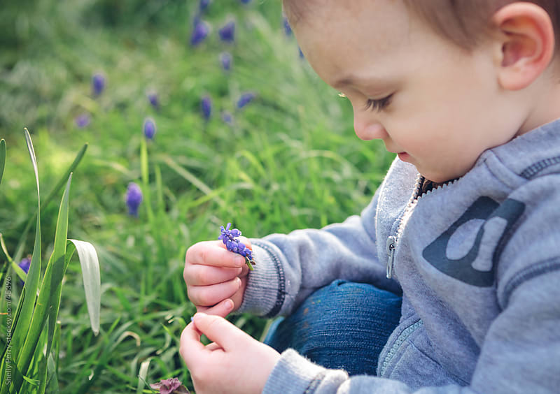 Two Year Old Boy Picking and Looking at a Small Flower by Shelly Perry for Stocksy United