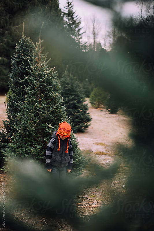 Boy with red hat in Christmas tree farm by Léa Jones for Stocksy United