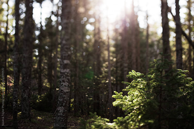Sun shining through trees by Isaiah & Taylor Photography for Stocksy United