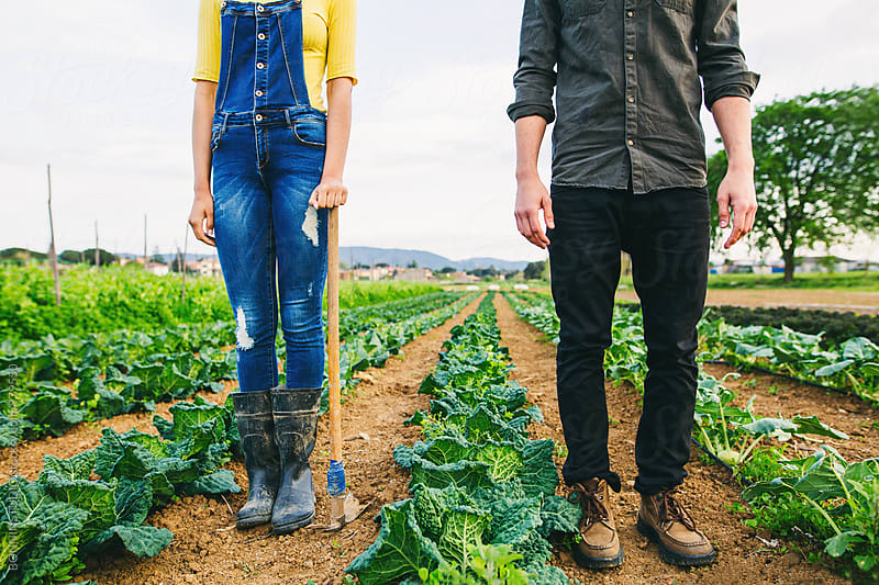 Couple standing in cabbage orchard.  by BONNINSTUDIO for Stocksy United