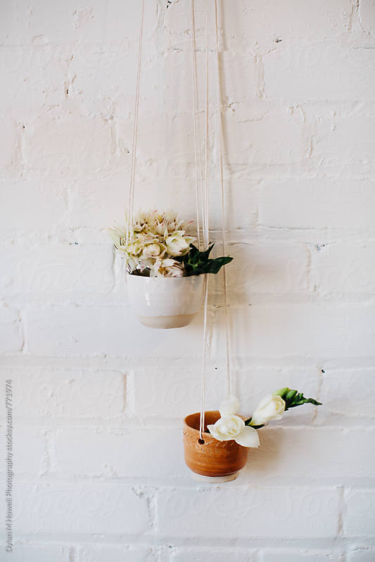 Hanging Potted Plants by Dylan M Howell Photography for Stocksy United
