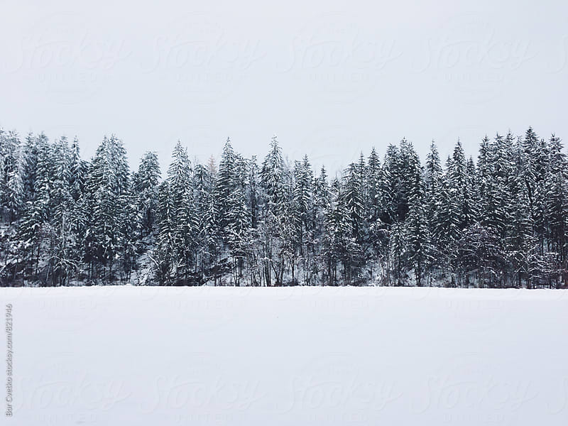 Forest and snow by Bor Cvetko for Stocksy United