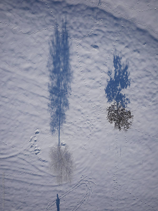 Aerial view of two leafless trees on white land by rolfo for Stocksy United